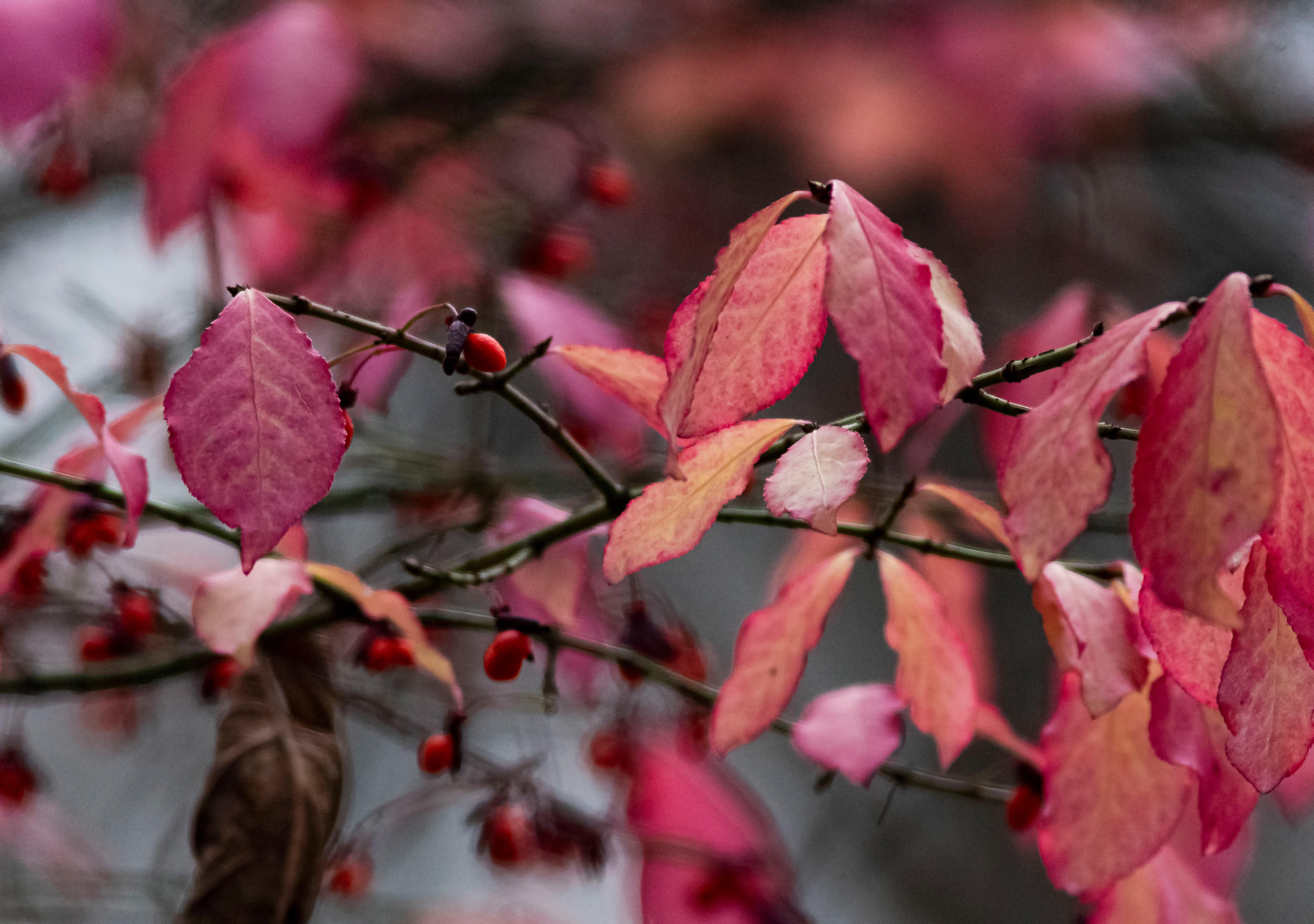 Fall Colours 9
