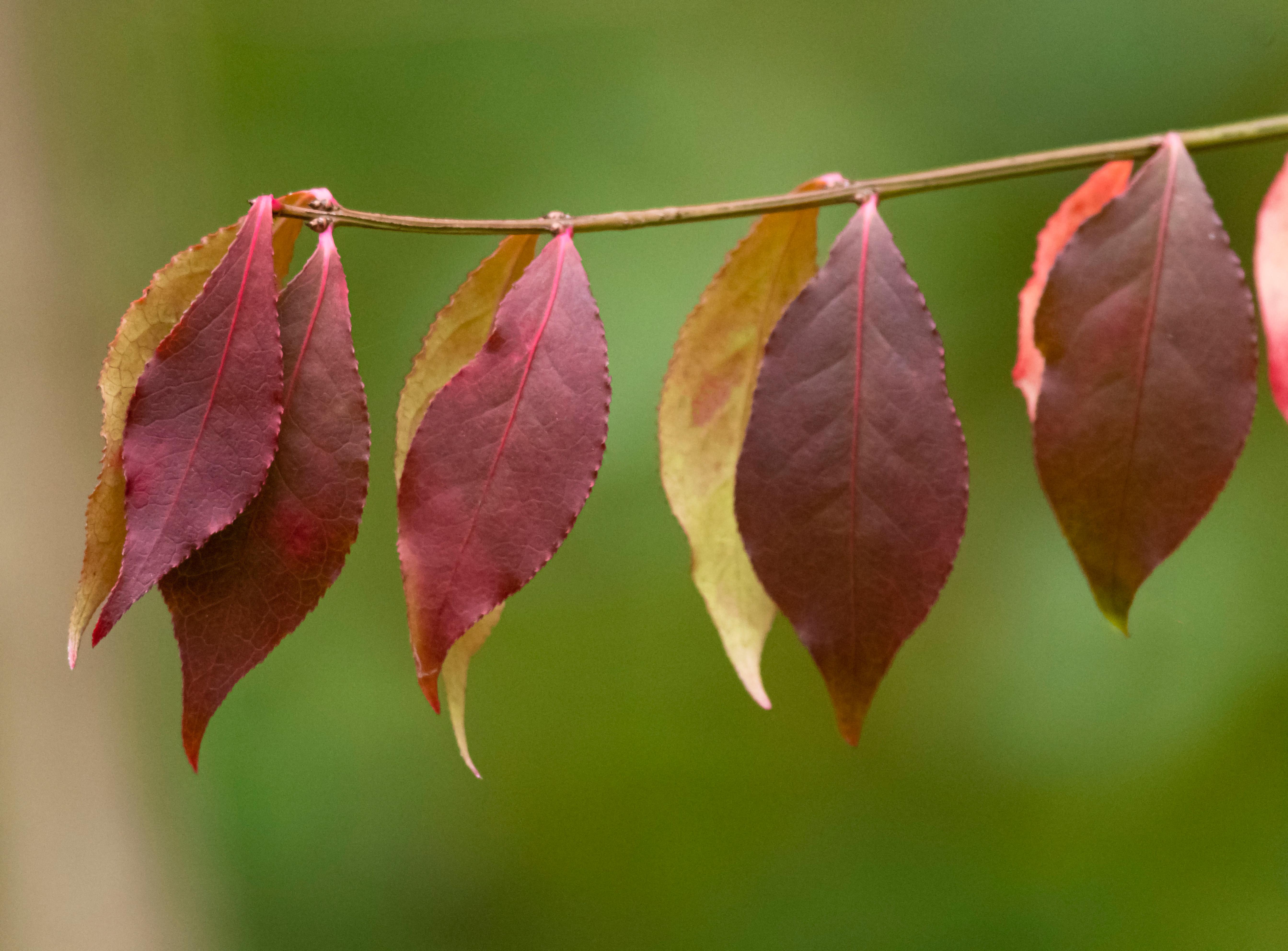 Fall Colours 12